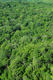 Aerial view of forest Royalty Free Stock Photography