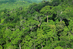 Aerial view of forest. Krabi in Thailand Stock Images
