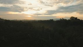 Tropical landscape at sunset, Bali,Indonesia. Aerial view of forest, mountains with fog, clouds at sunset on Bali,Indonesia. Tropical rainforest, trees, jungle stock video