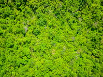 Aerial view of the forest Stock Image