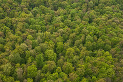 Aerial view of forest Royalty Free Stock Images