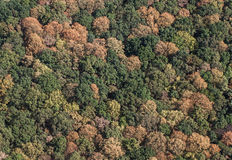 Aerial view of the forest Stock Images