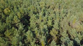 Aerial view of the forest stock video footage