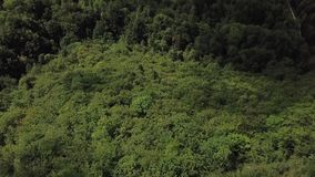 Aerial view of forest in Pyrenees, France stock video