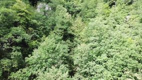 Aerial view of forest in Pyrenees, France stock video footage