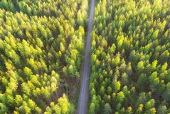 Aerial view of forest and road. Beautiful fresh spring forest royalty free stock photo