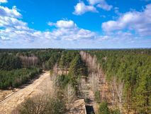 Aerial view of the forest in spring Stock Photography