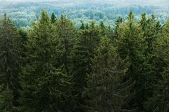 Aerial view of the forest - spruce trees from the top. Stock Photos