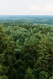 Aerial view of the forest - spruce trees from the top. Royalty Free Stock Image