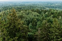 Aerial view of the forest - spruce trees from the top. Stock Image