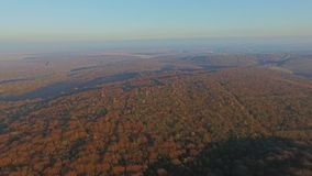 Aerial view of the forest. sunset stock footage