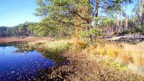 Aerial view on forest and swamp. Marsh and trees in autumn forest Stock Photography