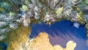 Aerial view on forest and swamp. Orto view on marsh and trees in forest Royalty Free Stock Images