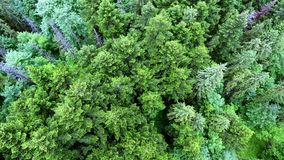 Aerial view of the forest. Top down view of the forest stock video