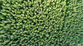 Aerial view of forest Royalty Free Stock Image