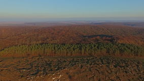 Aerial view of the forest. Ukraine Carpathians stock footage