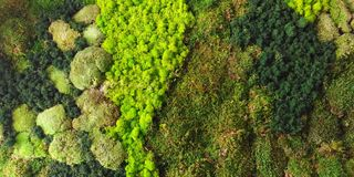 Aerial view of forest vegetation model   background texture stock photography