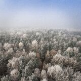 Aerial view of forest in winter