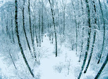 Aerial view of a forest at winter Stock Photo