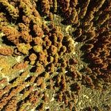 Aerial view of forests. Aerial view of forested area Royalty Free Stock Photo