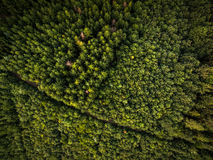 Aerial view of forests Royalty Free Stock Images