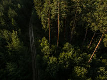 Aerial view of  forests Royalty Free Stock Photos