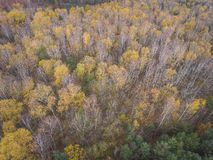 Aerial view of the forrest with different color trees. Taken dur Royalty Free Stock Images