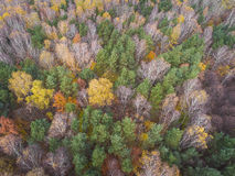 Aerial view of the forrest with different color trees. Taken dur Royalty Free Stock Photos