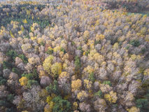 Aerial view of the forrest with different color trees. Taken dur Royalty Free Stock Photography