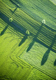 Aerial View : Four trees and shadows in a field