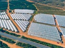 Aerial View Fruit and Orange Trees Plantation Stock Image