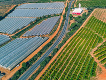 Aerial View Fruit and Orange Trees Plantation Royalty Free Stock Photo
