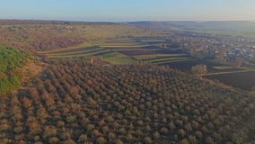 Aerial view of gardens and forest countryside stock footage