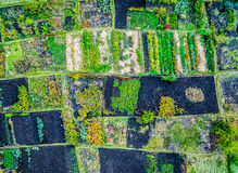 Aerial view of gardens Stock Photo