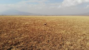 Aerial view, Gazelle, Natron Lake, Tanzania. The isolated road to Lake Natron offers a landscape of great beauty and a sense of space. It follows the escarpment stock images