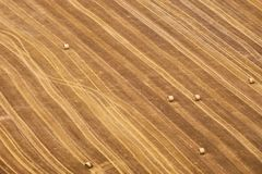 Aerial view of a geometric yellow field with rolled wheat straw waste. royalty free stock photo
