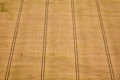 Aerial view of a geometric yellow wheat field. royalty free stock photography
