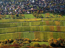 Aerial view German vineyards in Indian summer. High-angle shot of a vineyard landscape at the village Neuffen, Swabian Alps in Germany, by a sunny day in fall Royalty Free Stock Image