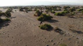 Aerial View, Giraffe, Natron Lake, Tanzania stock photos