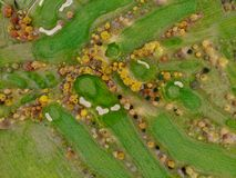 Aerial view of a golf course. royalty free stock photo