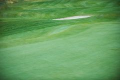 Aerial view of a golf course. Aerial view of a green golf course Stock Photography