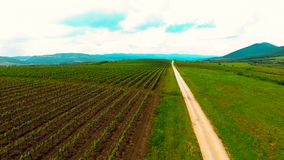 Aerial view of grape vineyard. Aerial panning view over field of grapevines in vineyard with dirt lane in rural countryside on sunny day stock footage