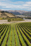 Aerial view of grapevine rows Royalty Free Stock Photography
