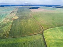 Aerial view of the green cultivated fields. Drone view of the green cultivated fields royalty free stock images