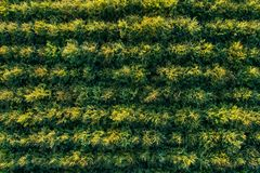 Aerial view of green deciduous forest plantations stock images