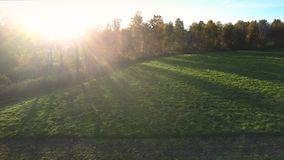 Aerial view green field and sun rays from behind trees stock video footage