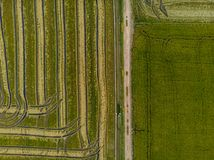 Aerial view of green fields strewn with rice, creating a texture for a background stock photos