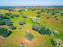 Aerial View Green Fields with Trees Royalty Free Stock Photography