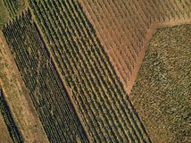 Aerial view of green fields and vineyard with natural light. Czech Republic royalty free stock image