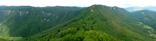 Aerial view of green forest stock images